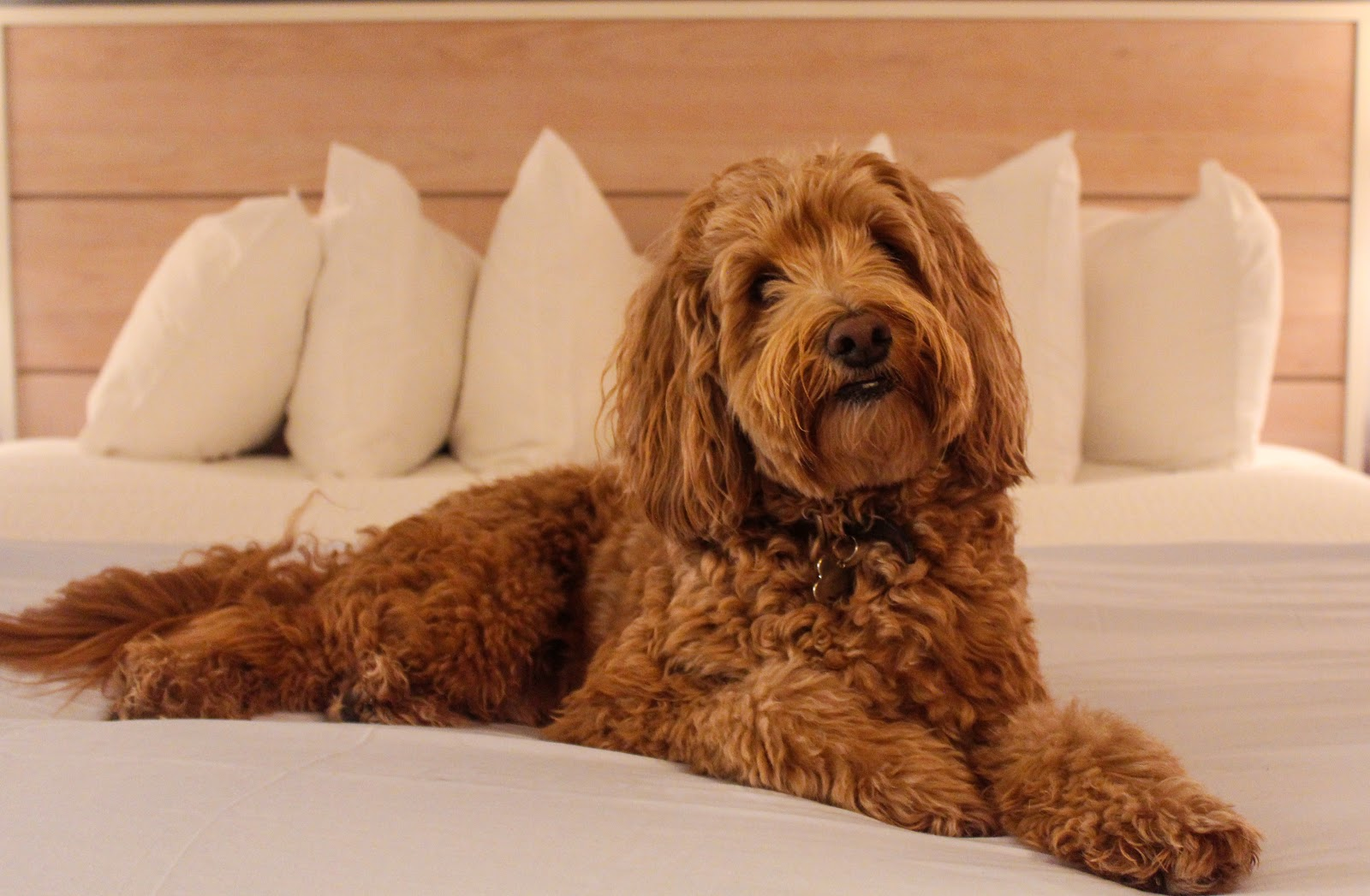 Pet friendly rooms available for only a $20/night fee.