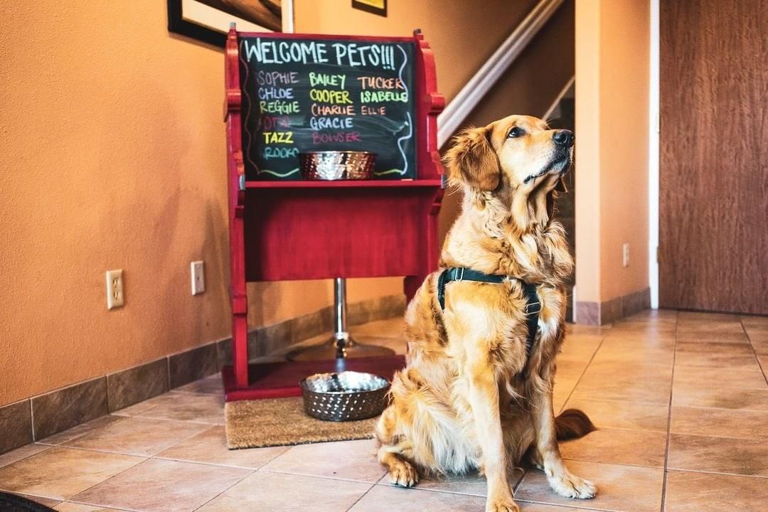 Good girl golden retriever posing at the dog station in Hallmark Resort Cannon Beach.