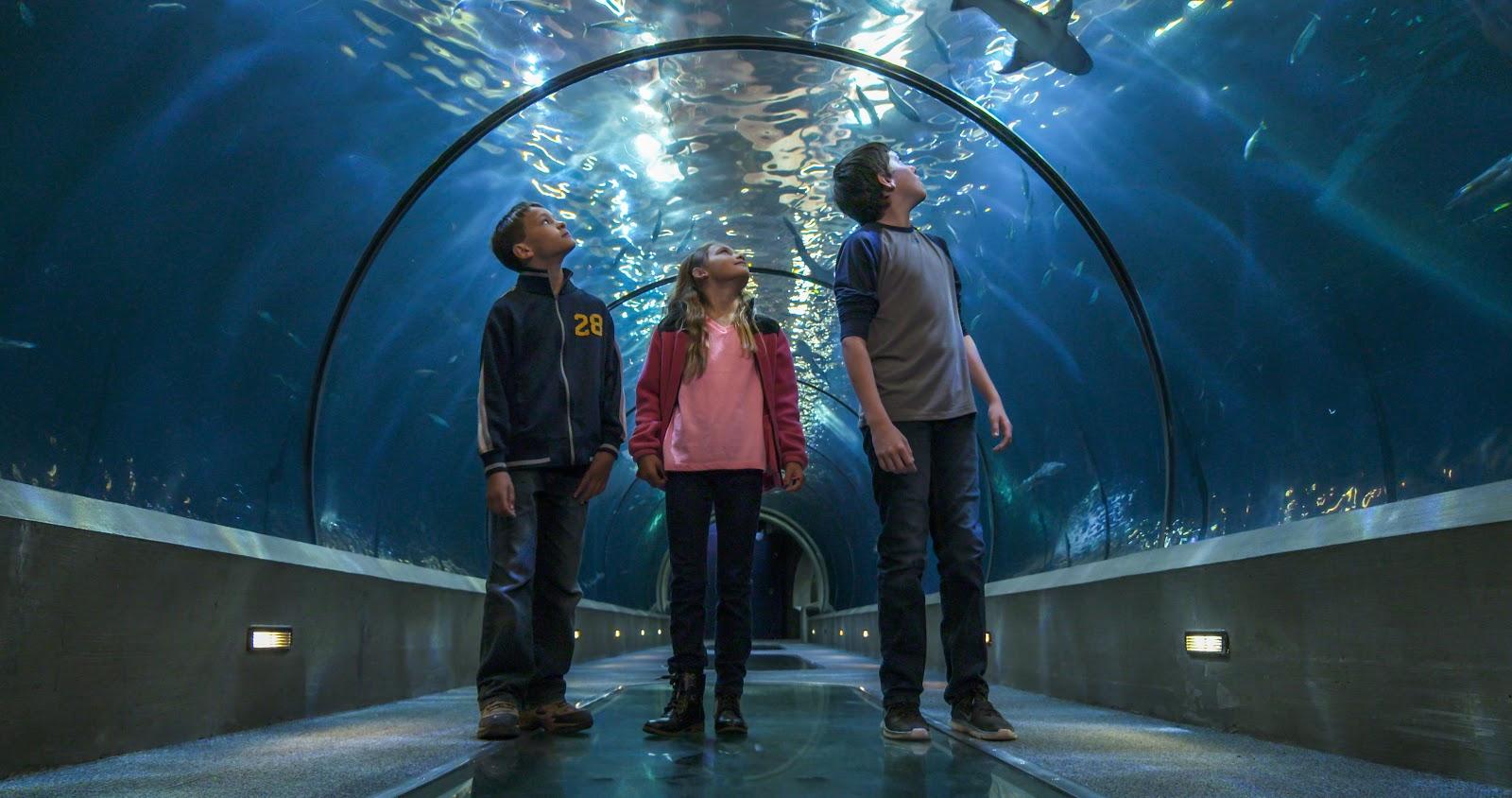 The miraculous Oregon Coast Aquarium in Newport