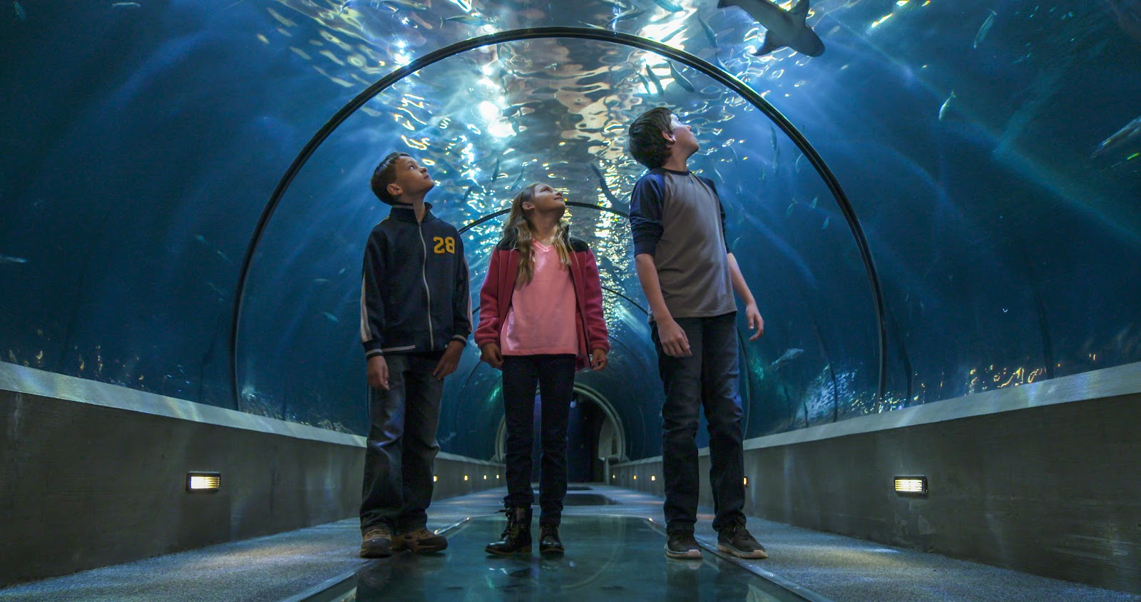 The miraculous Oregon Coast Aquarium in Newport