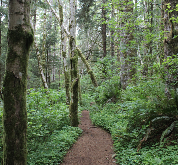 Best hikes in Cannon Beach, Oregon