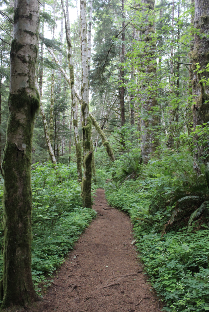 Best Hikes In Cannon Beach Oregon
