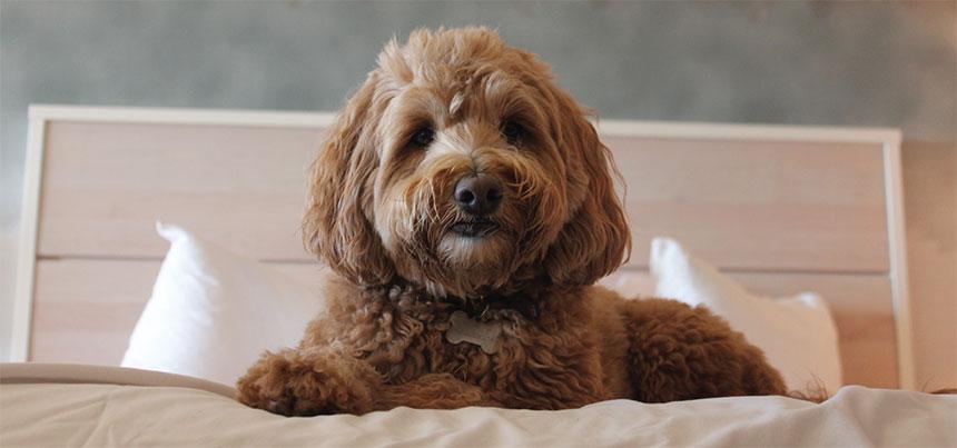 Happy pet on bed